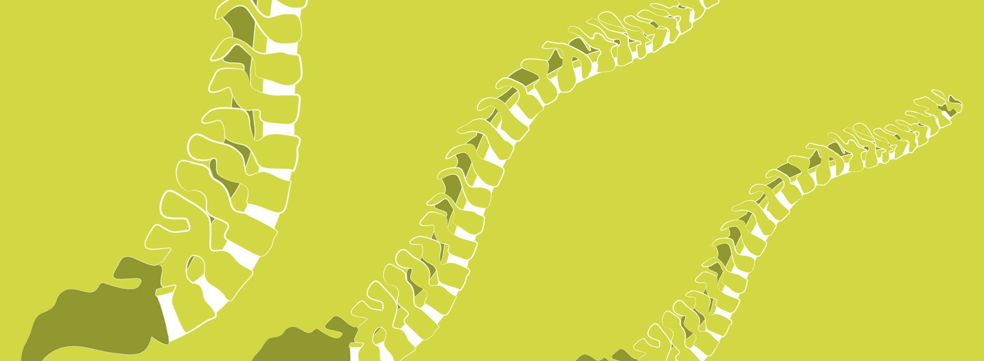 Wirbelsäule - Rückengesundheit